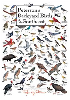 This stunning poster includes 81 of the most common backyard birds of the region. Region includes: VA, NC, SC, GA, FL, AL, MS, TN, KY. Printed on 80# coated stock using fade resistant inks and the highest production values, it is truly museum quality and suitable for framing.  Price: $19.95