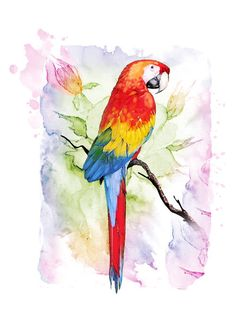 Macaw - Original Art Print - Bird - water color - 5 x 7 - Archival paper - great for gifting or personal collection