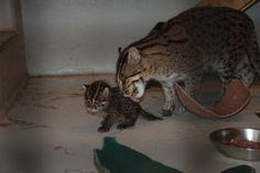 National Zoo Babies « CBS DC