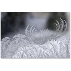 Trademark Fine Art February Window Frost Canvas Art by Kurt Shaffer, Size: 12 x 19, Multicolor