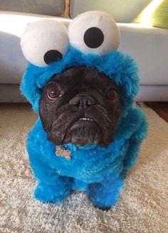 French Bulldog in Cookie Monster costume. How cool! All he ( or she) needs is a chocolate chip cookie