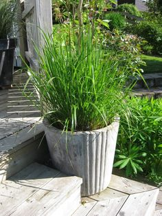 Bildresultat för gräs kruka