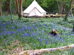 Eco-camp-uk-at-wild-boar-wood-large (Camping and glamping in Europe)
