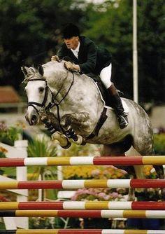 Irish Sport Horse stallion Cruising
