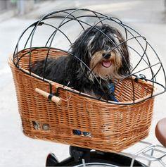 Pasja Rear Pet Basket by Basil Baskets http://talbotscyclery.com/product/basil-baskets-pasja-rear-pet-basket-2034.htm http://talbotscyclery.com/product/basil-baskets-pasja-space-frame-2035.htm
