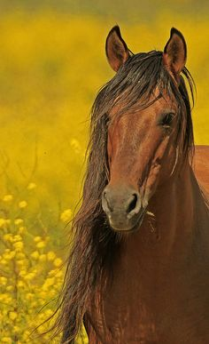 ♂ Wildlife photography animal horse #horse #animals Mustang Stallion