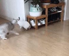 Such a curious cat https://ift.tt/2vuzwzP #Puppy #Puppies #Pics #Dog #Adopt #Pets #Animals