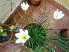 Beautiful Lily's