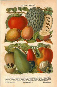 1920s Tropical Fruits Print Lithograph Avocado  Mango Guava Vintage Food Kitchen Decor via Etsy