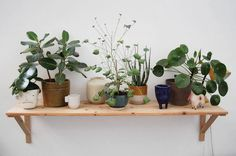 Rena van Hear Hear | Green Hunters Geraniums, Planter Pots, Van, Studio, Interior, Green, Instagram Posts, Indoor, Vans