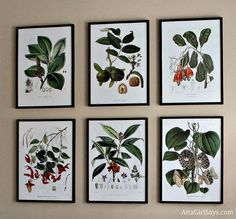 Create an inexpensive art grouping for a large wall using antique botanical prints and cheap Ikea frames. Click for my favorite sources of botanical prints.