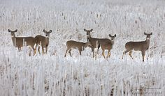 Upload your best active weather photos and videos or watch them in our new searchable gallery. Animals Presqu'ile Deer Seek Refuge From Ice Storm. Cold Rain, Storm Photography, Ice Storm, Weather Network, Local History, Mother Earth, Great Places, Ontario, Deer