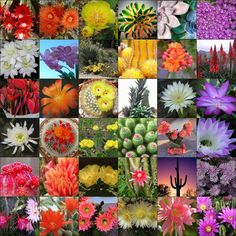 flowering cacti tumblr - Google Search