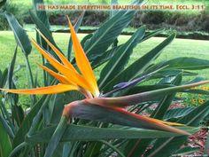 Beautiful Bird of Paradise Flower