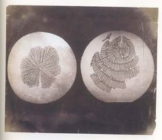 William Henry Fox Talbot, Photomicrographs of plant stems