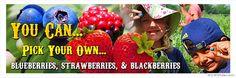 Blessington Farms - pick Strawberries, blueberries, blackberries, etc. Not too far past Fulshear!