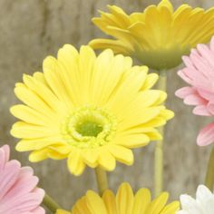 Gerbera daisies are bright, cheerful, friendly flowers that bring a smile to your day and look fantastic when mixed with multiple colors. #country #decor #artificial #spring #flowers