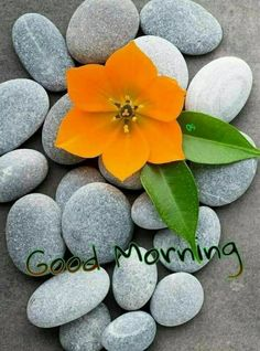 Good Morning Quotes, Wishes, Greetings, WhatsApp Messages, and Images Good Morning Rose Images, Good Morning Flowers, Good Morning Picture, Good Morning Messages, Good Morning Good Night, Morning Pictures, Good Morning Wishes, Good Morning Wednesday, Happy Day Quotes