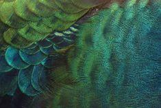 Large Weekender Carry-on Peacock Bird Profile Ambesonne Peacock Gym Bag