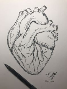 Human heart drawing #easydrawing