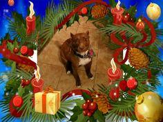 Feliz Navidad MI nombre es pepe Christmas Ornaments, Holiday Decor, Beautiful, Home Decor, Merry Christmas, Xmas Ornaments, Homemade Home Decor, Christmas Jewelry, Christmas Ornament