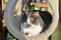 Bertha Louis The Cat (BLT Cat)  DOB: 6/2/2005  Fun Facts: Bertha did not come with her name - her name was assigned to her because of her size. We're constantly working on getting her to a healthier weight, but man - it's hard when the girl breaks into bags of dog food!