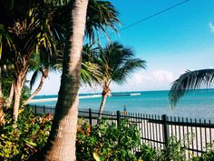 Key West Higgs Beach #palmtrees