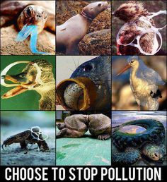 It really is so simple. YOU can make the choice to stop pollution - save the seas - save the animals - save the earth.