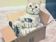 What do you mean I'm too big? I mean You YOU'RE too big!- Cats In Boxes - Funny Cat Photos - Good Housekeeping