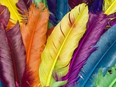 plumes coloré