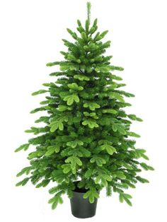 5.5ft Nordic Spruce Feel-Real Memory-Shape Artificial Christmas ...