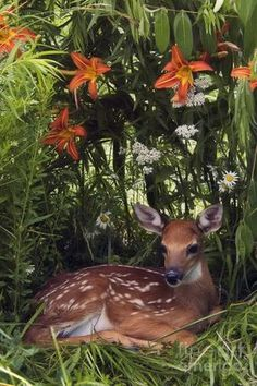 Fawn and Lilies by Daniel Dempster