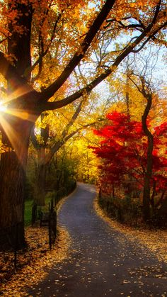 autumn, park, trees, light, morning, foliage