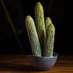 MOHAVE CACTUS - PLANTS - WYLD HOME - 1