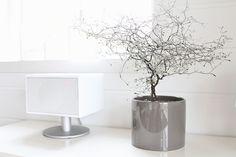 Geneva + new plant (corokia)