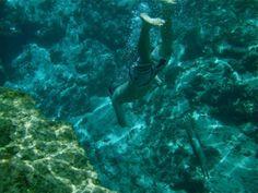 Ichetucknee Springs State Park | Swimming in Head Spring, Ichetucknee Springs State Park, Lake City, FL ...