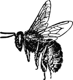 Bee by @PeterM, Original coming from:http://karenswhimsy.com/public-domain-images/, on @openclipart