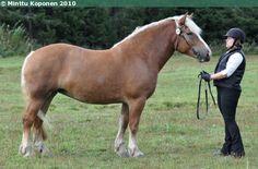 Estonian Draught - mare Vihma