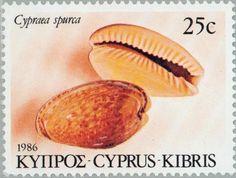 Stamp: Cypraea spurca (Cyprus) (Sea Shells of Cyprus) Mi:CY 660,Yt:CY 656