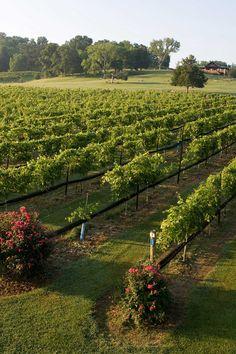 Arrington Vineyards, just outside of Nashville