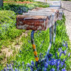 Bluebonnet mailboxes