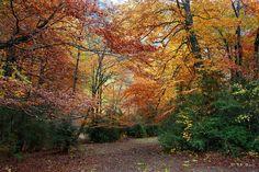 www.tecendoredes.com/otoño