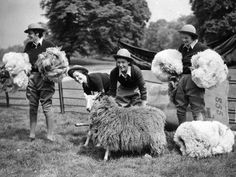 Four members of the WLA (Women's Land Army), shearing sheep in London's Hyde Park, 15 May 1940 Uk History, Women In History, British History, World History, World War Ii, History Channel, Old Photos, Vintage Photos, Old Pictures