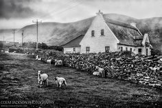 Sheep Farm. Dingle. Ireland.   www.colmjackson.com Sheep Farm, Ireland, Jackson, Photography, Photograph, Fotografie, Photoshoot, Irish, Jackson Family