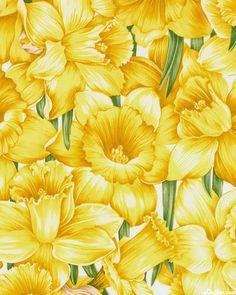 Floral Dance - Daffodil Rapture - White