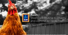ALDI Australia: Commit to cage free eggs.  Click here to support a sister.  A global company needs to display global sophistication.