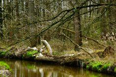 Dommeldal (tussen Riethoven en Dommelen)