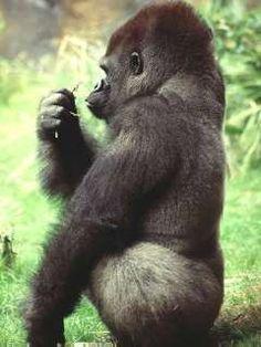Amazon+Tropical+Rainforest+Animals | Amazon rainforest animals ...