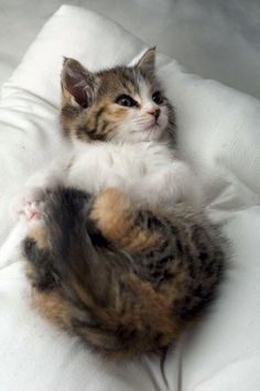 TOP 36 Cats and Kittens