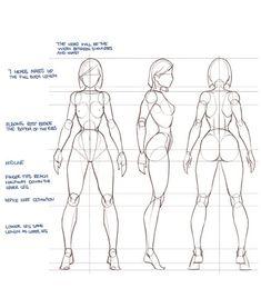 Drawing the human figure   Drawing in Photoshop via PinCG.com #anatomydrawingfemale